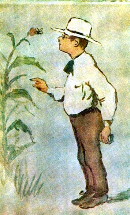 Featured image for post 'Béla Bartók, entomologist